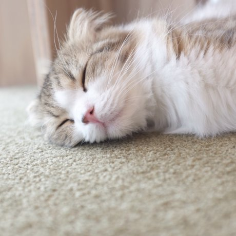 貓咪咖啡廳 MoCHA 原宿店