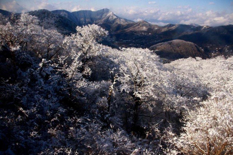 手握周遊票暢遊箱根——邂逅「櫻花雪」