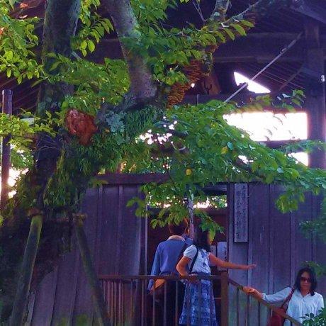 飛鳥寺的梵鐘