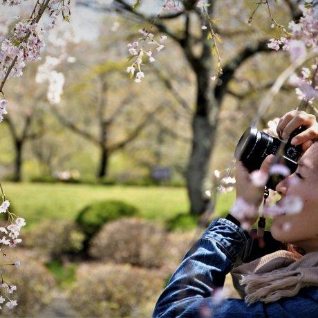 日式庭園攝影課