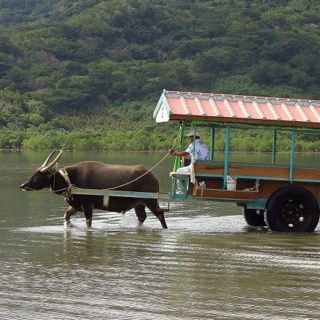 石垣島水牛車之旅