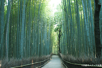 Sagano Bamboo Forest Path